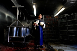 Little Saigon: Poultry worker